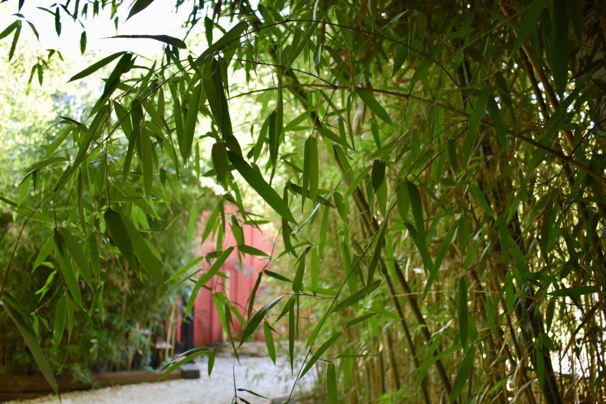 bamboo near the gym