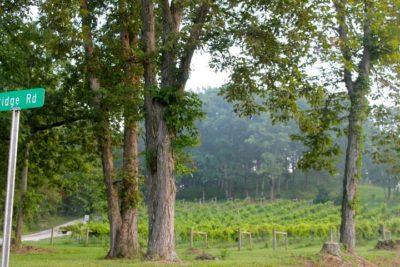 vineyard view at y